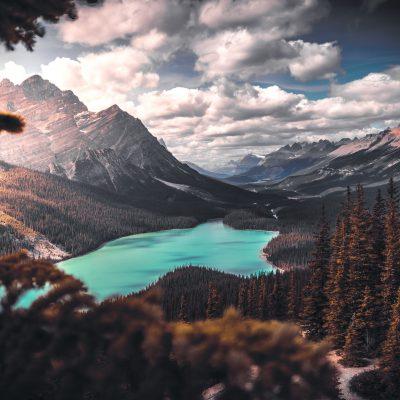 Pemandangan Danau Pohon Gunung