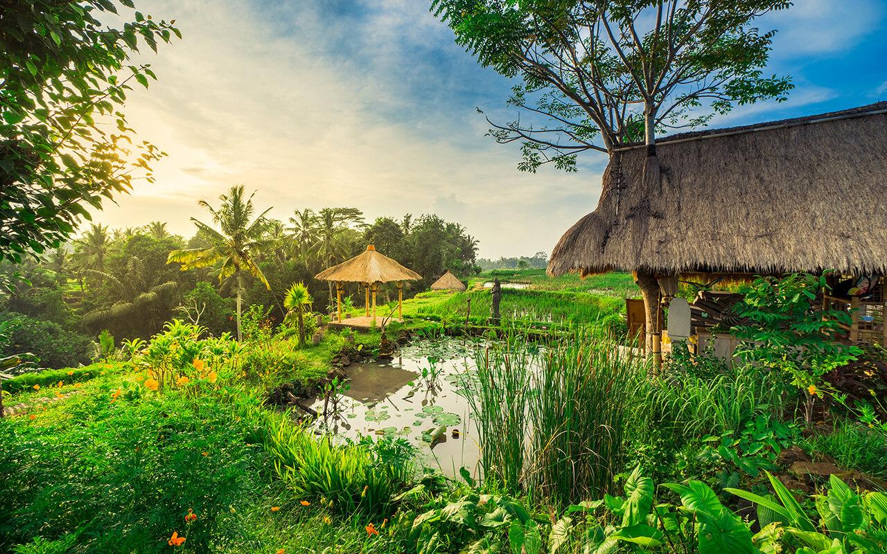 Pemandangan Alam Pedesaan Ubud
