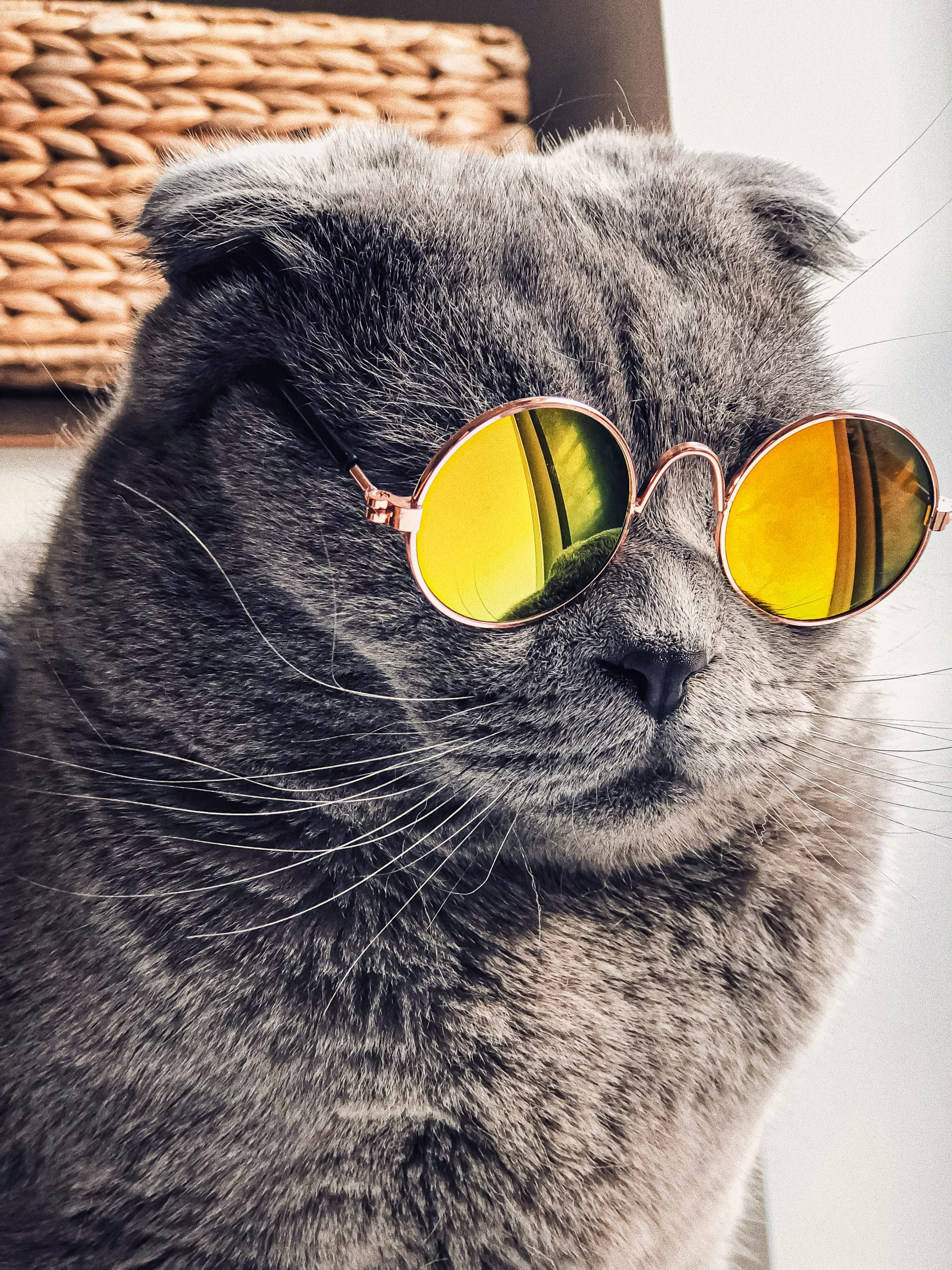 Kucing Lucu Pakai kacamata Bulat