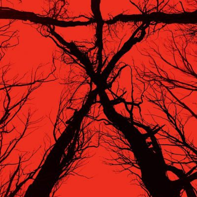 film blair witch wallpaper