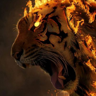 Harimau Wallpaper Api