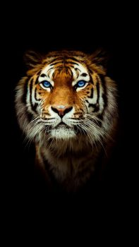 Harimau Wallpaper HD