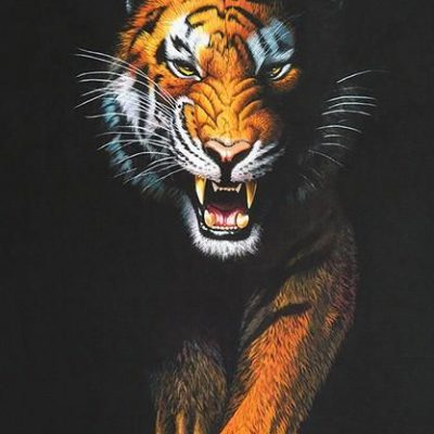 Wallpaper Harimau Marah